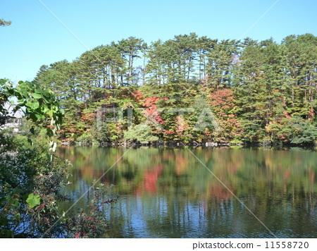 五色沼 藍色的湖水 十沼 11558720