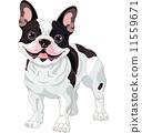 French bulldog 11559671