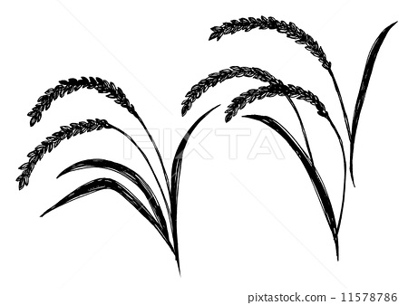 Rice Plant Drawing