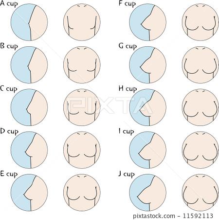 C Cup Breast Vs B Cup 尺寸 胸像 胸-图�...