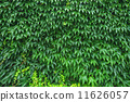 잎, 녹색, 식물 11626057