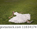 laying, african, grass 11634174