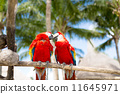 wildlife, parrots, sitting 11645971