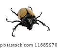 rhino beetle bug. 11685970