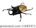 rhino beetle bug. 11685971