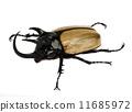 rhino beetle bug. 11685972