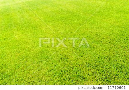 잔디 11710601