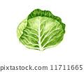 白菜的插圖 11711665