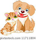 puppy, domestic, kitten 11711804
