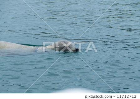 Sea lion 11712712