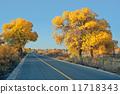 公路兩旁的金色胡楊林 11718343