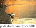 瀘沽湖的清晨 11722001