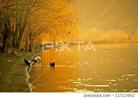 泸沽湖的清晨 11722002