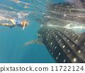 鯨鯊 11722124