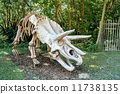 fossil natural triceratops 11738135