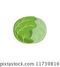 矢量 甘藍 包菜 11739816