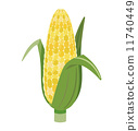 corn, vector, vectors 11740449
