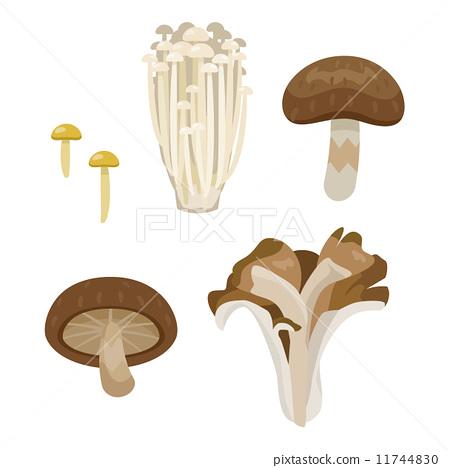 vector, vectors, mushroom 11744830