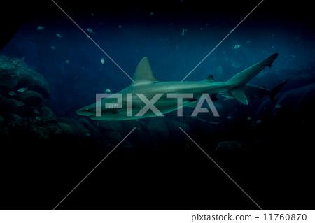 Sharks - 8 11760870