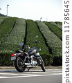 Tea field and motorcycle 11785645