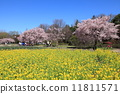 芦花公園の花畑 11811571