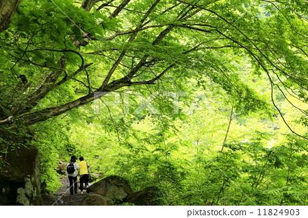 Fresh green road 11824903
