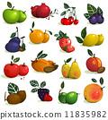 berries, vector, collection 11835982