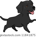 Labrador Retriever 11841875