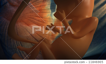 Unborn baby 11846905