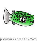 可愛的Midori Fugu 11852525