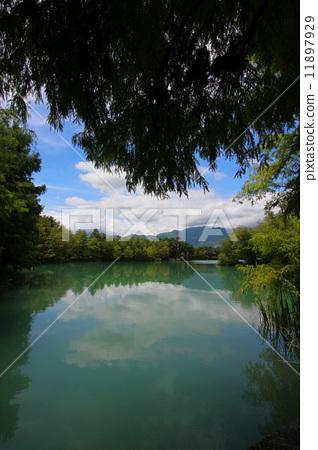 湖中樹 11897929