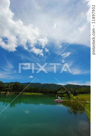 湖中樹 11897932