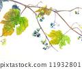Wild grapes 11932801