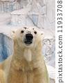 Polar bears 11933708