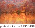 ใบไม้สีแดงสดของ Hakkoda Ieumuma 11950490