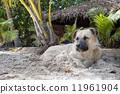熱帶 放鬆 海灘 11961904