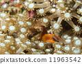 礁 野生 水下 11963542