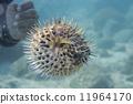 海洋 動物 水下 11964170