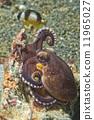 underwater, octopus, coconut 11965027