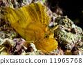 cebu, fish, leaf 11965768