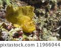 cebu, fish, yellow 11966044