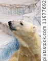 Polar bears 11977692