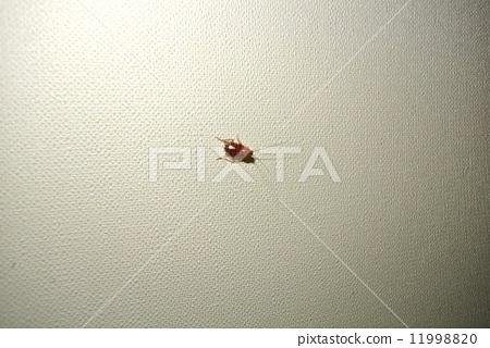 德國蟑螂的幼蟲右下方 11998820