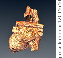 Model of ruined human heart 12004640