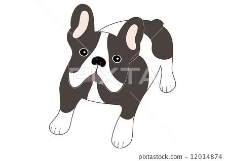 French bulldog 12014874