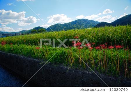 교토 카메오 피안 꽃의 마을 12020740