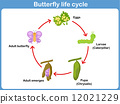 Vector Life cycle of a butterfly for kids 12021229