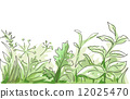 Herbs Border 12025470
