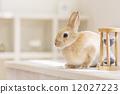 野兔 動物 貓 12027223
