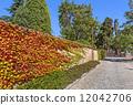 Autumnal ivy on brick wall. 12042706